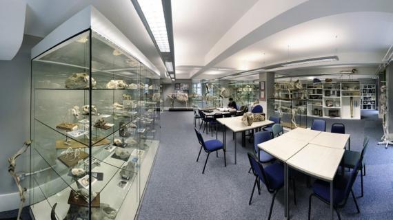 RVC Anatomy Museum